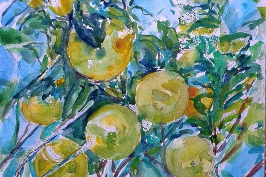 Lemons in the tree at Zebbug by Doranne Alden Caruana
