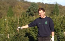 Christmas Tree Throwing Competition Launched in the UK