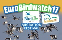 Fascinated by bird migration?