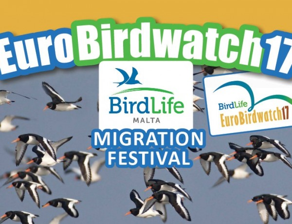 POSTER_BLM_Migrationfestival-1