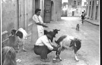 Whatever happened to the Maltese street vendor?